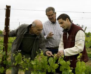 Aubert, Larry and Stéphane in vineyard