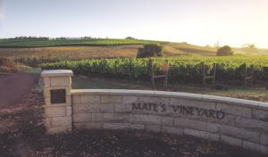 Kumeu Mate's Vineyard