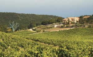 Chêne Bleu - Vineyards and Winery