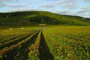 DRC Harvest 2012 Echezeaux