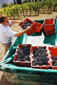 Lorezno Regoli, winemaker