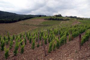 Campo a Prato Vineyard