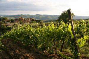 Casalino Vineyard with the village of Volpaia in the distance