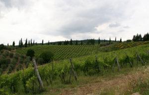 Coltassala Vineyard