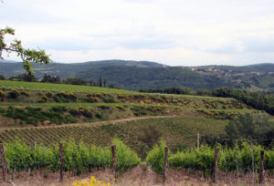 Pratolino Vineyard