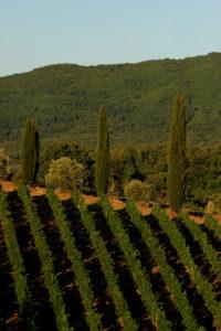 Vineyards at Volpaia