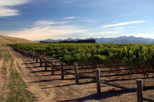 Mount Nelson Vineyards