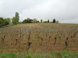 Mambourg Grand Cru Vineyard