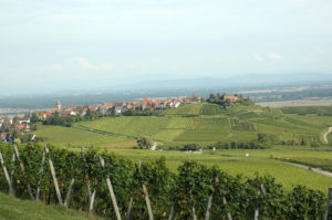 Vineyards; town of Alsace in the distance