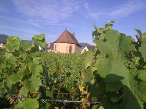 Chapel in the vineyards