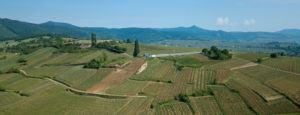 Pierre Sparr Mambourg Grand Cru Vineyard